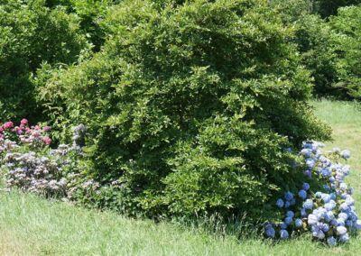 arboretum-039