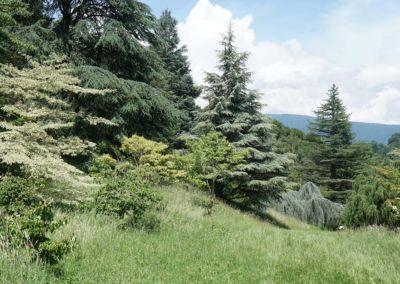 arboretum-043