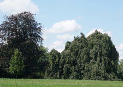 bonstettenpark-080
