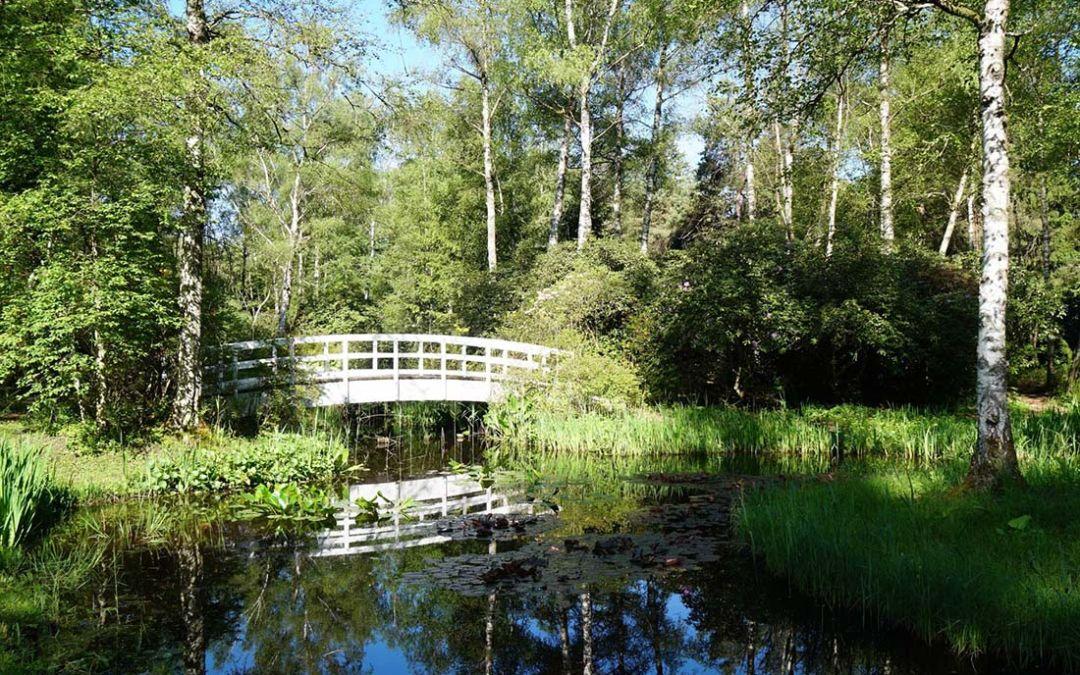 Park Seleger Moor